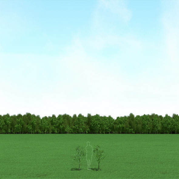 Willow (Salix) Trees 3d Models - 3DOcean Item for Sale