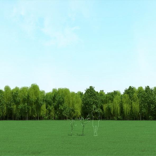 Blooming Cherry Trees (Prunus Cerasus) 3d Models - 3DOcean Item for Sale
