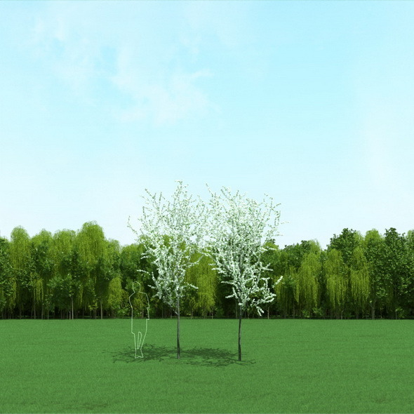 Blooming Cherry Trees 3d Models - 3DOcean Item for Sale