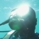 Scuba Diver In Blue Water On Sunny Day - VideoHive Item for Sale