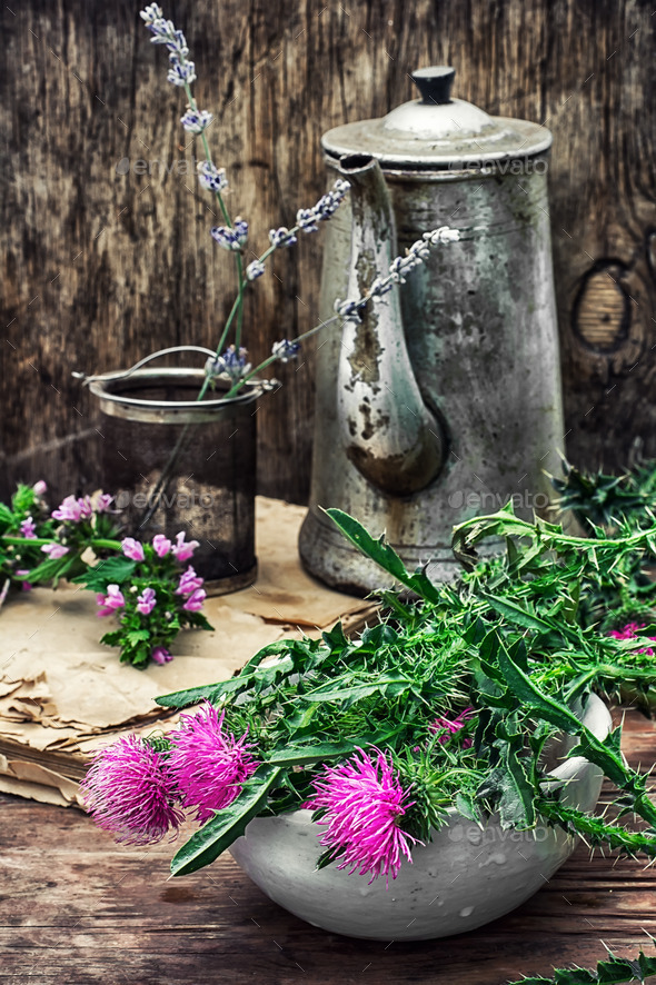 procurement of medicinal wild herbs thistle  - Stock Photo - Images