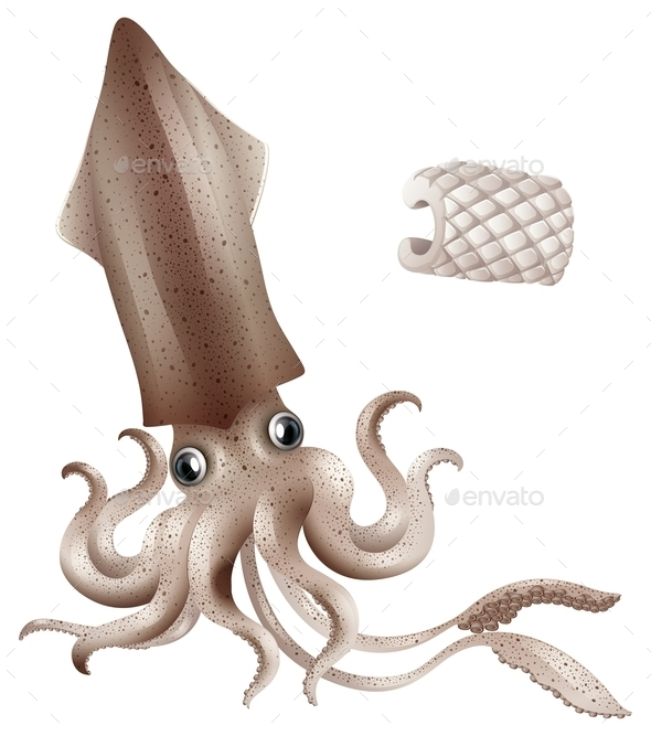 Squid - Animals Characters