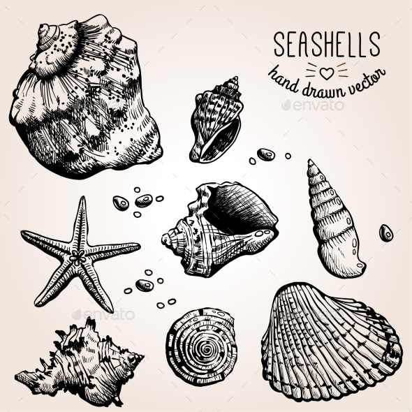Hand Drawn Collection Of Various Seashell - Travel Conceptual