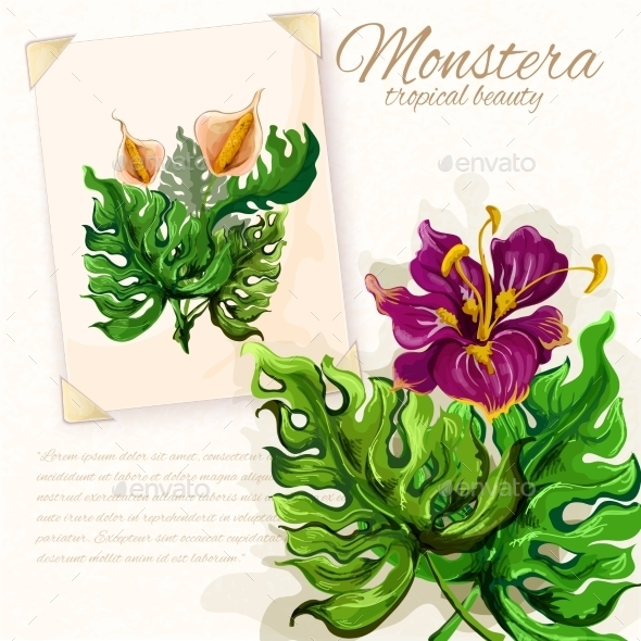 Monstera Leaves With Hibiscus Flowers Design  - Decorative Vectors
