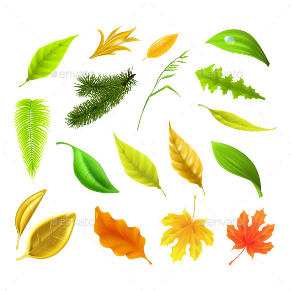 Colorful Leaves Collection - Organic Objects Objects