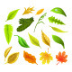 Colorful Leaves Collection - GraphicRiver Item for Sale