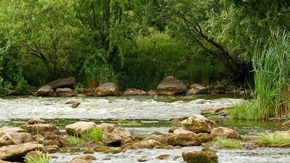 Landscape Of The River With Stones And Plants
