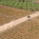 Car Running through the Fields - VideoHive Item for Sale