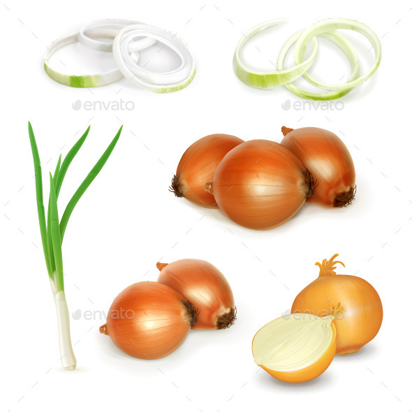 Onion Illustration - Food Objects