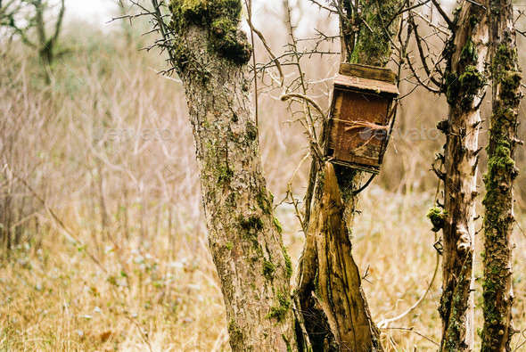 Bird box on an old tree trunk - Stock Photo - Images