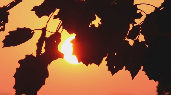 The Silhouette of The Branches Against The Sun 2