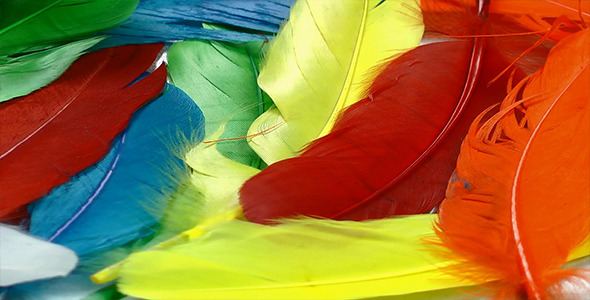 Colorful Feathers 2