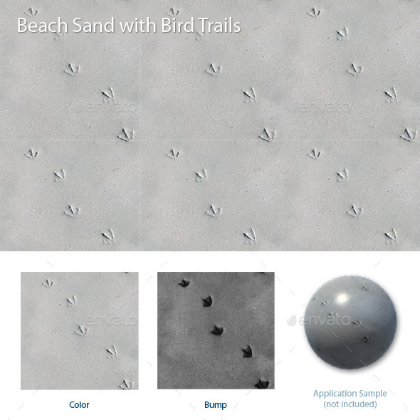 Beach Sand with Bird Trails - 3DOcean Item for Sale