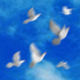 Flying doves (pack Vol.2) - VideoHive Item for Sale