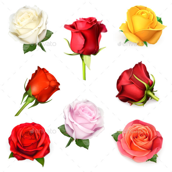 Red, Pink, Yellow and White Roses - Flowers & Plants Nature