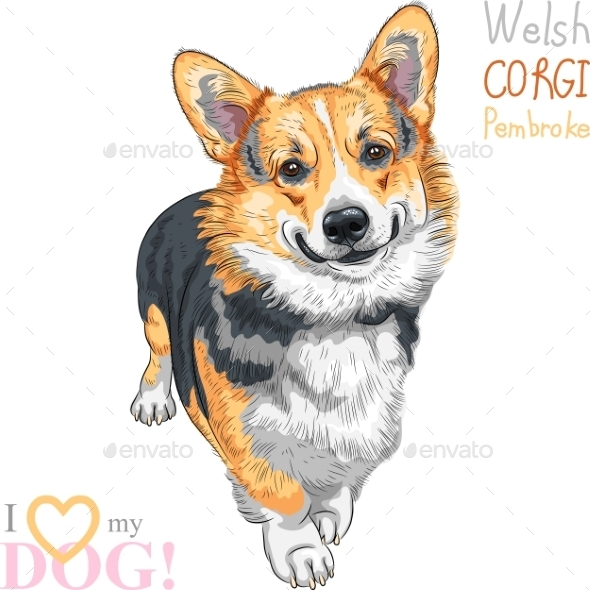 Pembroke Welsh Corgi Smiling - Animals Characters