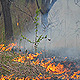 Wildfire - VideoHive Item for Sale