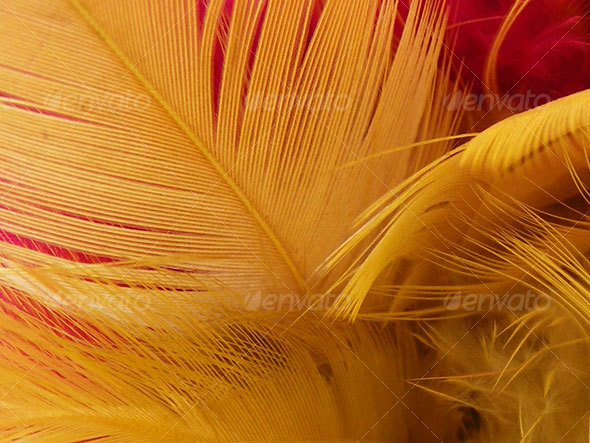 14 feather pack 1 - Nature Textures