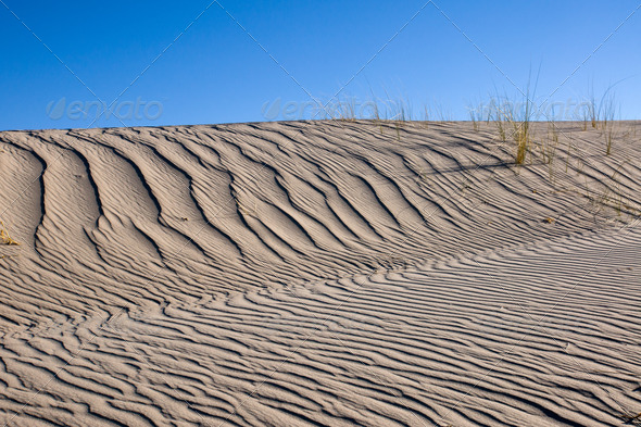 Sand dune with same marram grass  - Stock Photo - Images