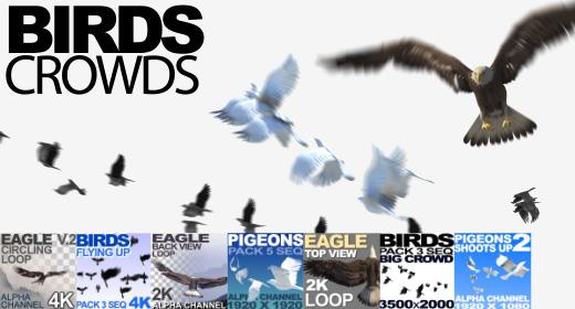 Birds Animation Crowd