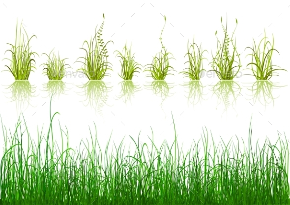 Green Grass - Flowers & Plants Nature