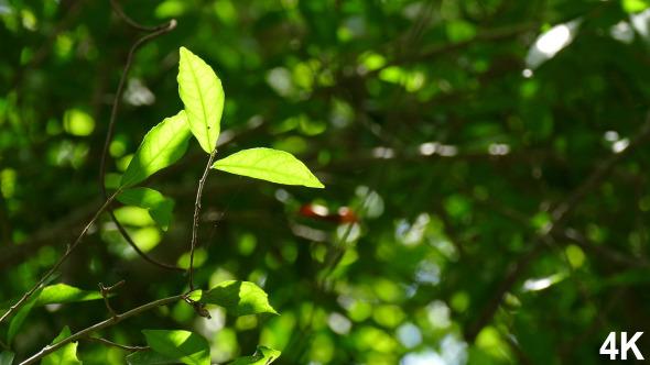 Foliage Nature