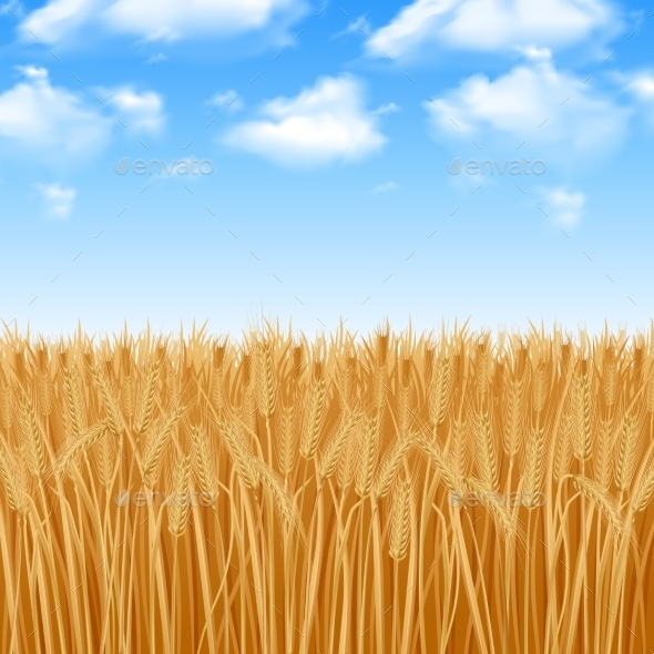 Wheat Field Background - Landscapes Nature