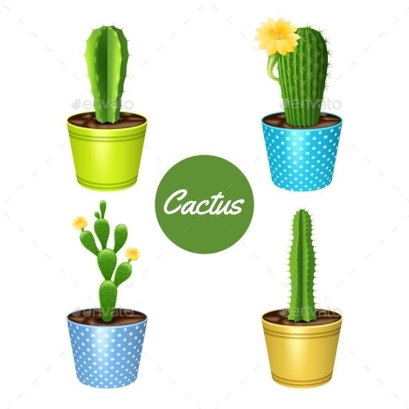 Cactus in Pots Set - Flowers & Plants Nature