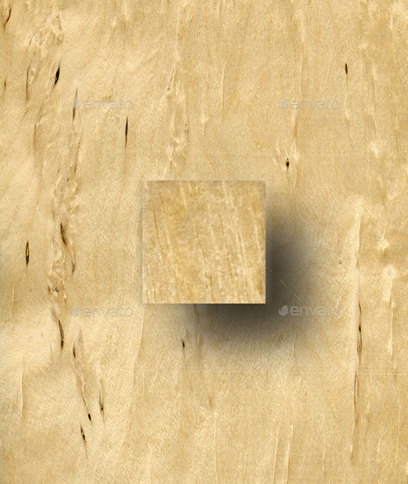 Masur Birch Wood Texture