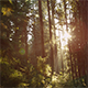 Northwest Forest - VideoHive Item for Sale