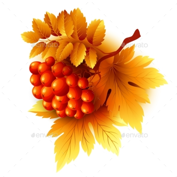 Rowan Branches with Orange Leaves and Berries - Seasons Nature