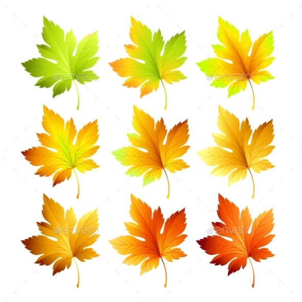 Set Of Colorful Autumn Leaves. Vector Illustration - Seasons Nature