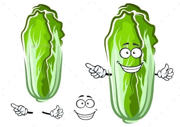Cartoon Green Chinese Cabbage Vegetable - Food Objects
