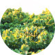 Wind on Green Vineyard - VideoHive Item for Sale