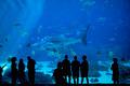 crowd at an aquarium