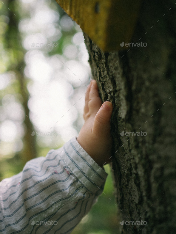 A childs hand touching a tree. - Stock Photo - Images