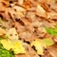 Autumn Season - VideoHive Item for Sale