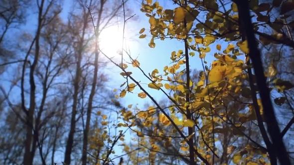 Sun Shining Through Colorful Autumn Leaves Making