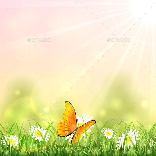 Orange Butterfly and Flower - Flowers & Plants Nature