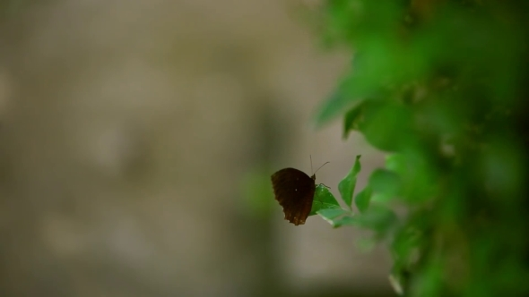 A Brown Butterfly Sitting On The Leaf Of a Plant