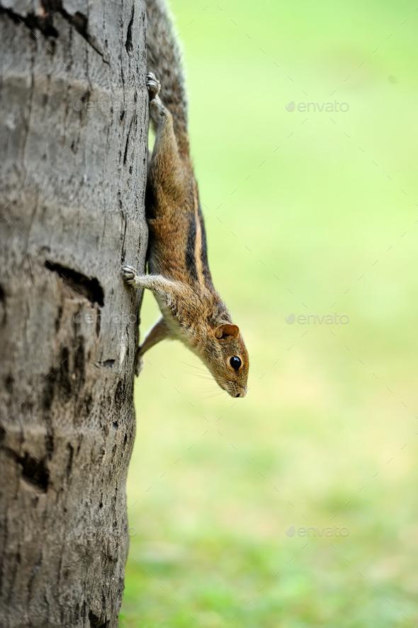 Wild chipmunk - Stock Photo - Images
