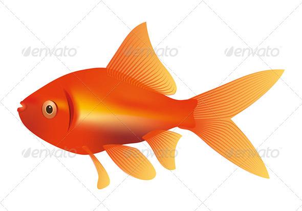 Goldfish - Animals Characters