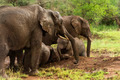 Herd of elephants resting, Serengeti, Tanzania, Africa