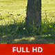 Under a Tree in a Sunny Day - VideoHive Item for Sale