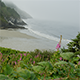 Oregon Coast Wildflowers - VideoHive Item for Sale