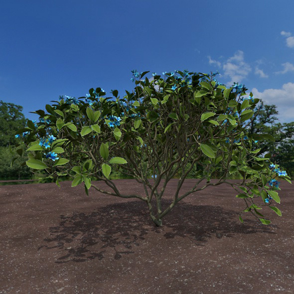 blue shrub - 3DOcean Item for Sale