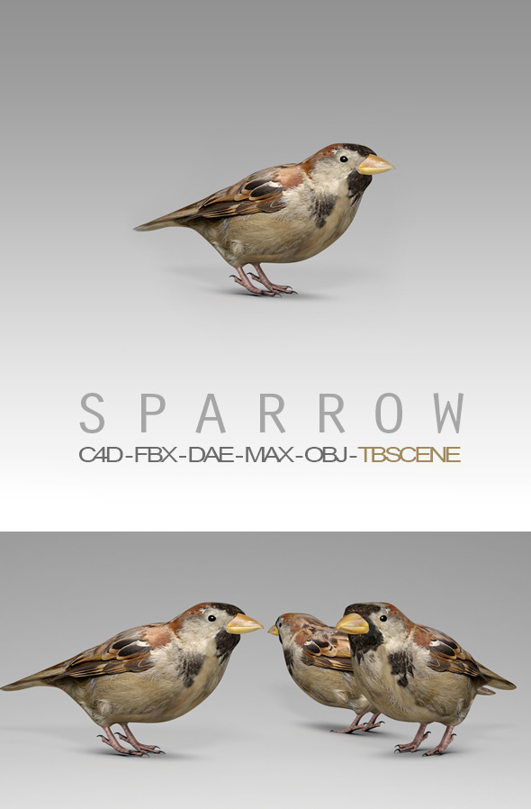 Simple House Sparrow Bird - 3DOcean Item for Sale