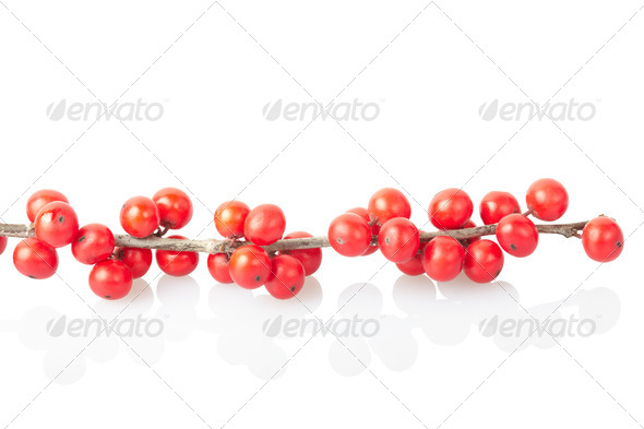 Christmas branch with red berries - Stock Photo - Images