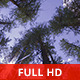 Peaceful Forest - VideoHive Item for Sale