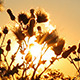 Sunbeams Nature - VideoHive Item for Sale